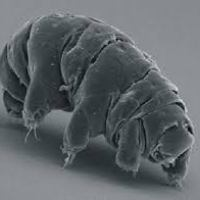 Of #autism and tardigrades - does naming a thing confer ownership? #SelfDXIsValid