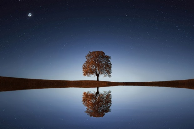 tree by lake with moon and stars overhead